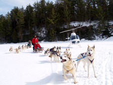 Winterdance Doggsledding Tours Natinal Helicopters
